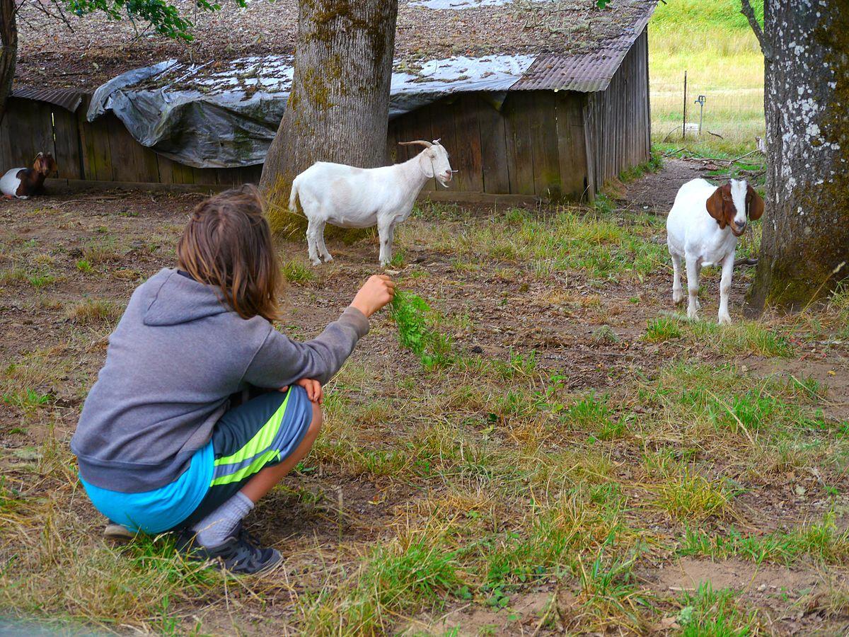 Nourrir les animaux 2