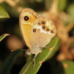 Photo papillon