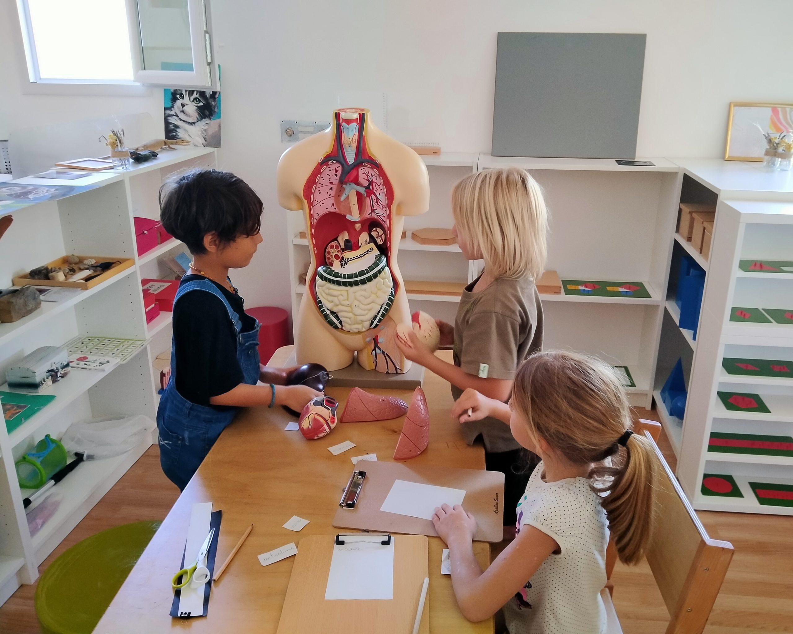 3 enfants autour d'un corps humain en plastique