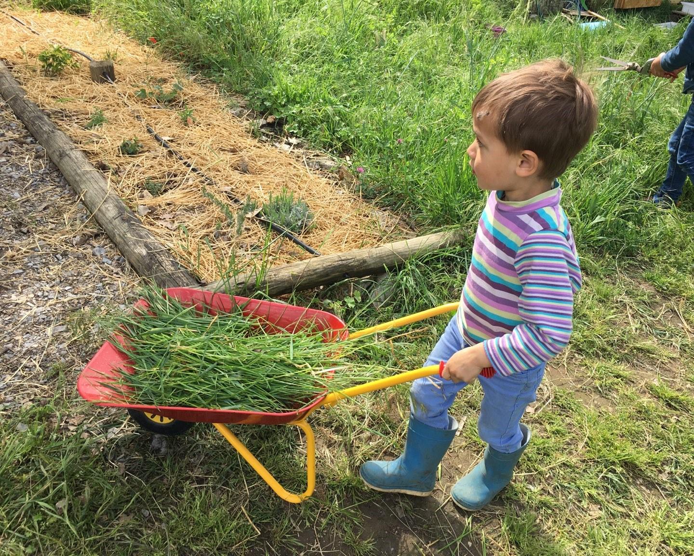 Petit enfant poussant une brouette pleine d'herbes vertes